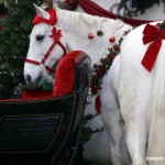 Santa's Horse at the Holiday Bazaar