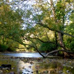 The Wissahickon Creek,     a lifeline through the park